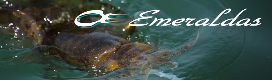 Daiwa - Emeraldas - Eging Spinning Reels | Eastackle