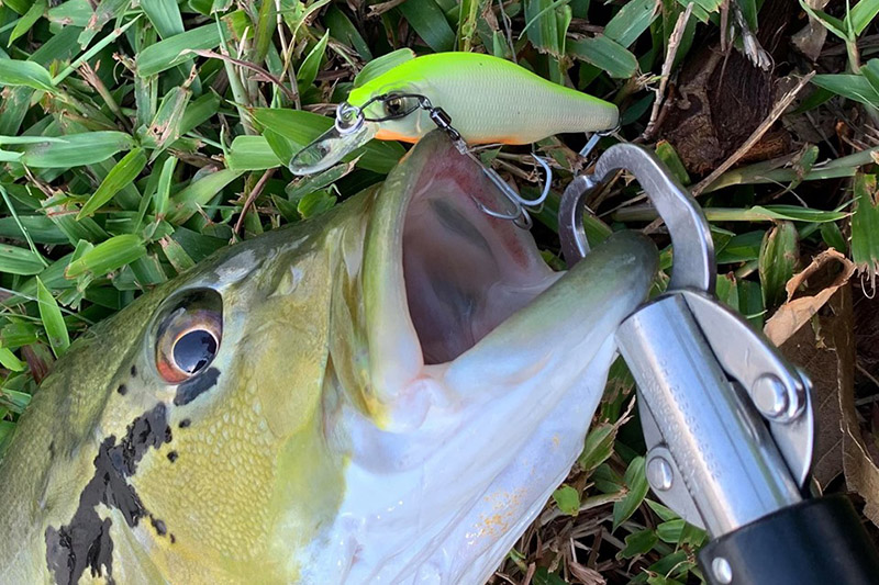 Megabass - X-80 SW - PM HOT SHAD - Sinking Minnow (12 Jun 2019)